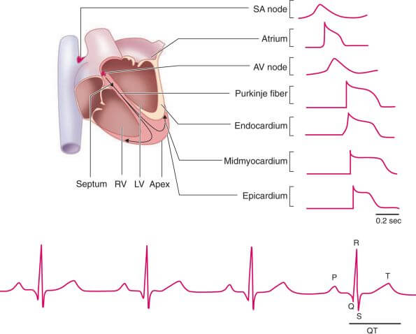 Heart physiological measurement method